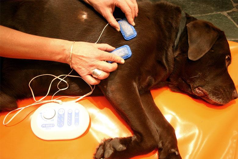 PET'S FISIO - Elettrostimolazione
